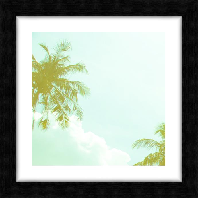 Miami Palm V